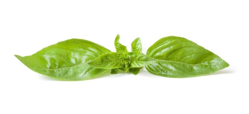 Blätter des Basilikums stockfoto