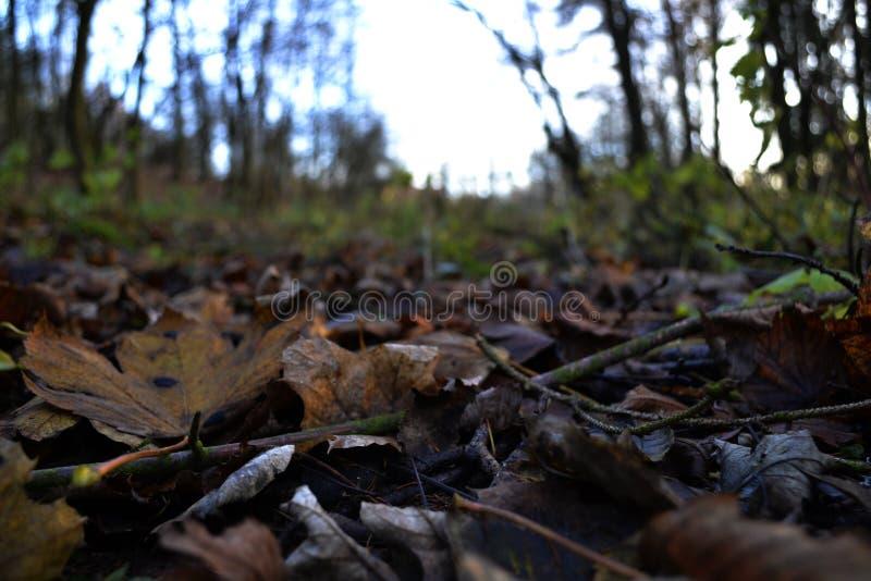 Blätter, die aus den Grund in einem Wald liegen lizenzfreie stockfotografie