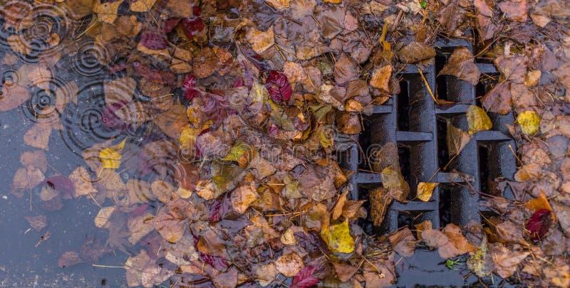Blätter, die einen Abfluss verstopfen lizenzfreie stockfotografie
