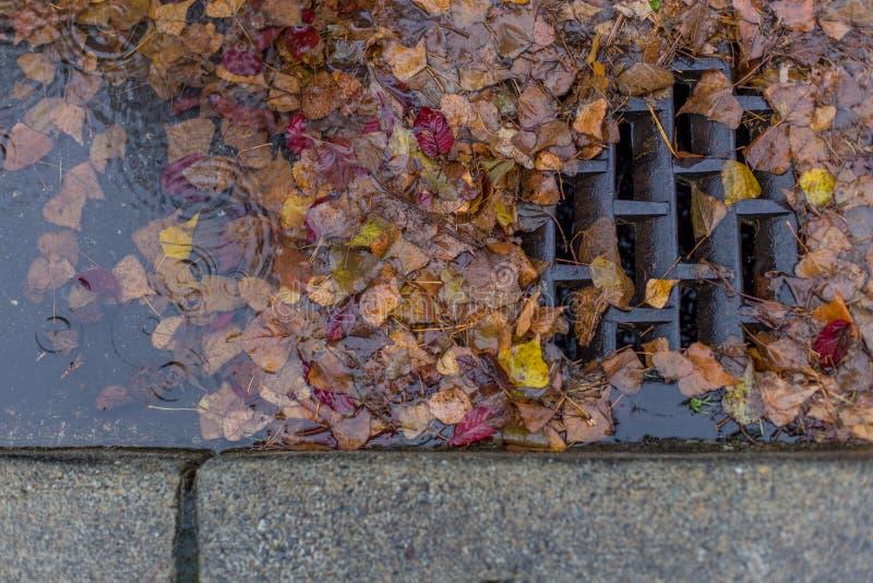 Blätter, die einen Abfluss verstopfen stockfotografie