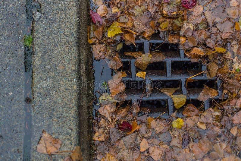 Blätter, die einen Abfluss verstopfen stockfotos