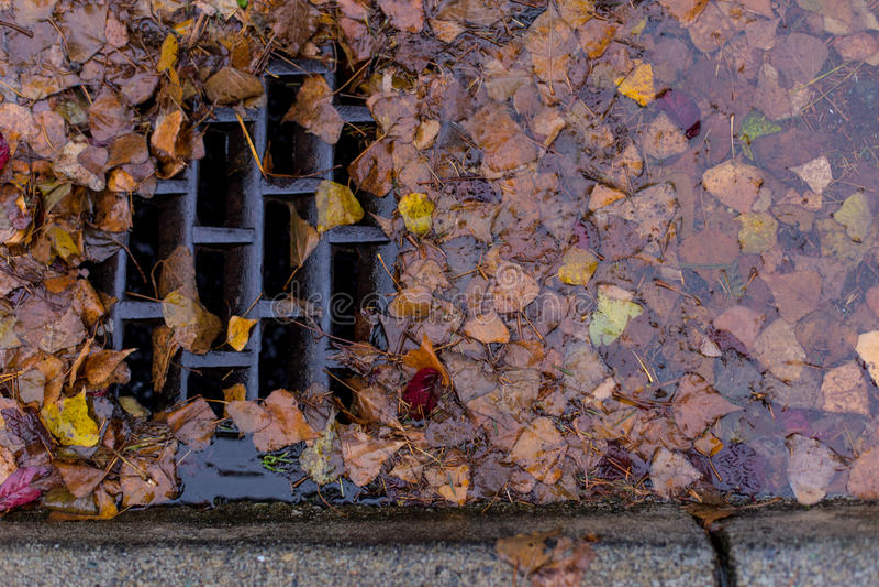 Blätter, die einen Abfluss verstopfen stockfoto