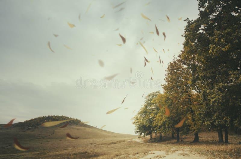 Blätter durchgebrannt durch Wind im Herbst lizenzfreies stockbild