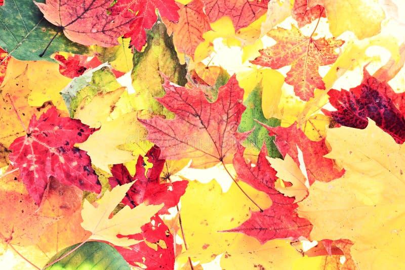 Blätter - Fallblatt-Hintergrundbeschaffenheit stockbild