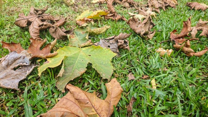 Blätter fallen in Herbstsaison 02 stockbild