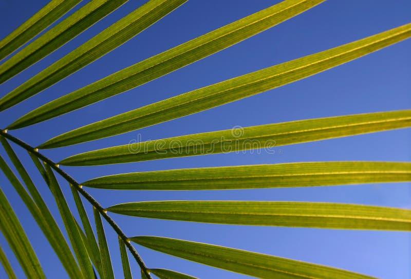 Blätter gegen Himmel stockfotografie