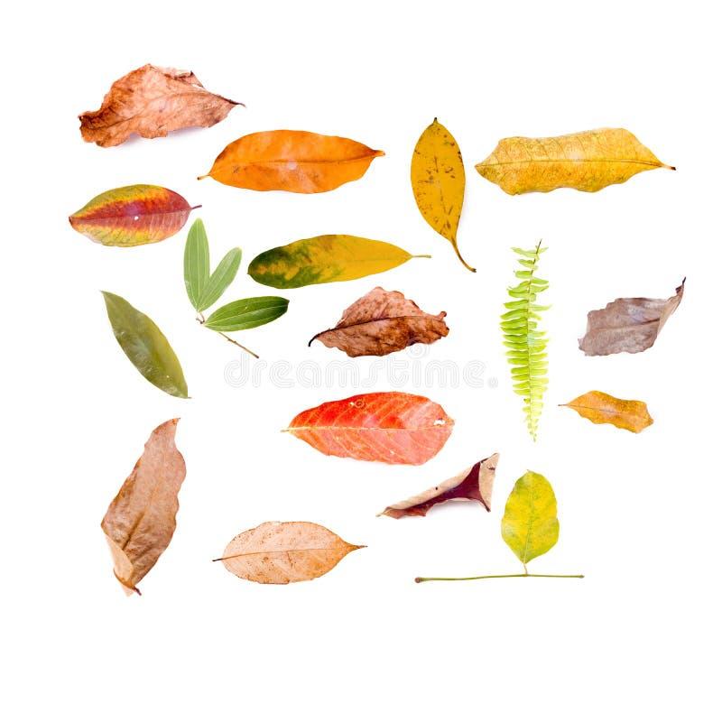 Blätter getrennt auf Weiß stockbilder