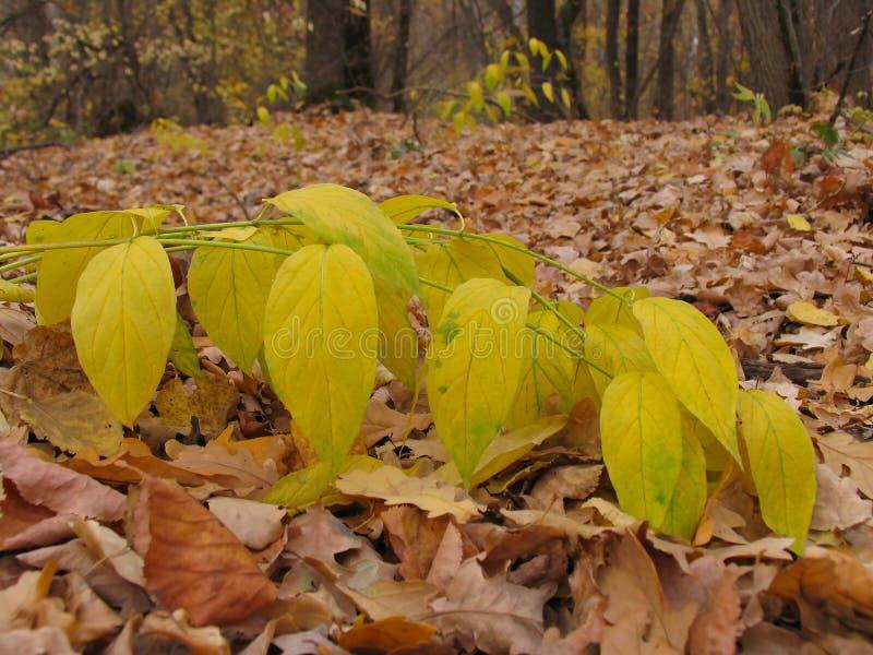Blätter im Herbst lizenzfreie stockfotos