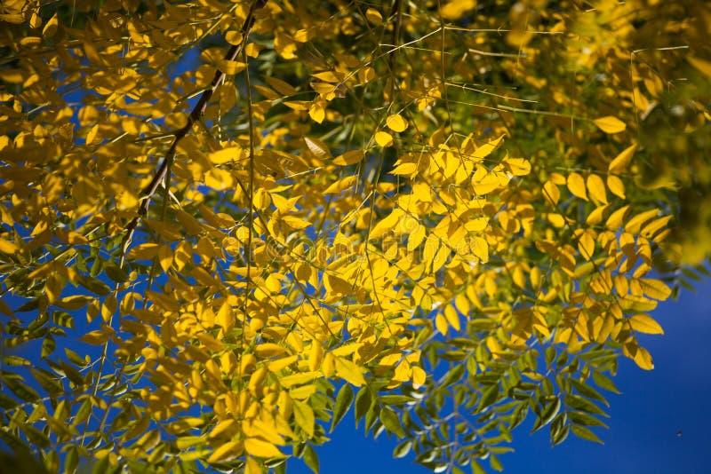 Blätter im Herbst lizenzfreie stockbilder
