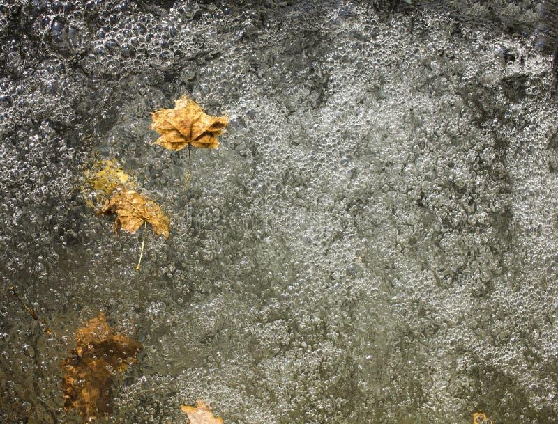 Blätter im Wasser stockbilder