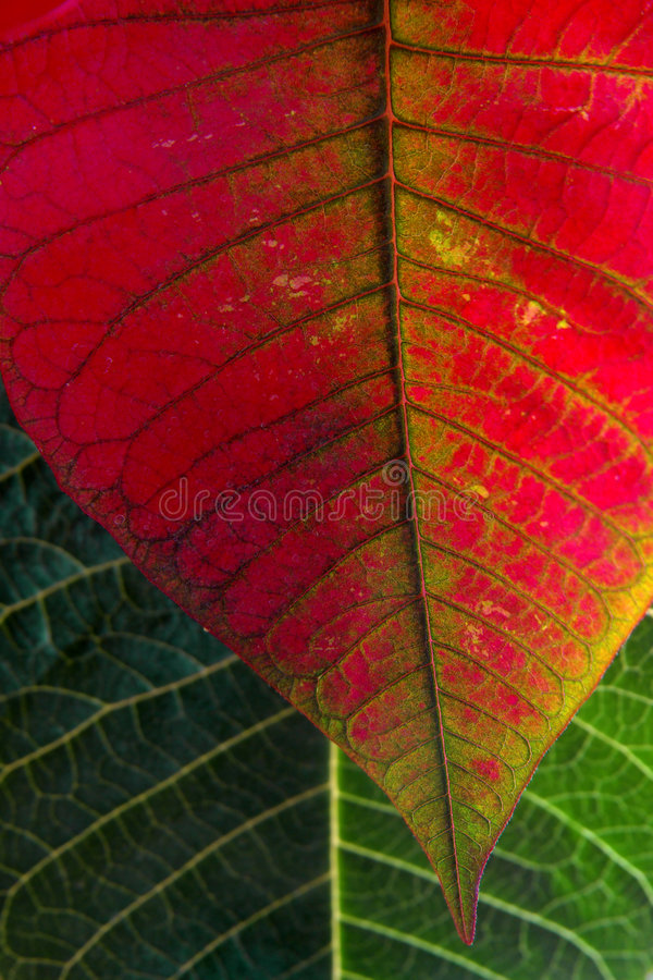 Blätter Makro lizenzfreies stockfoto