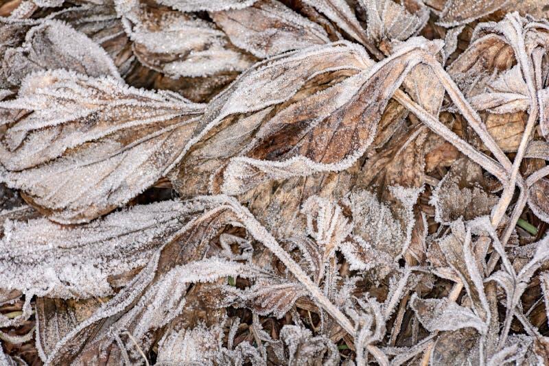 Blätter mit Frost lizenzfreie stockbilder