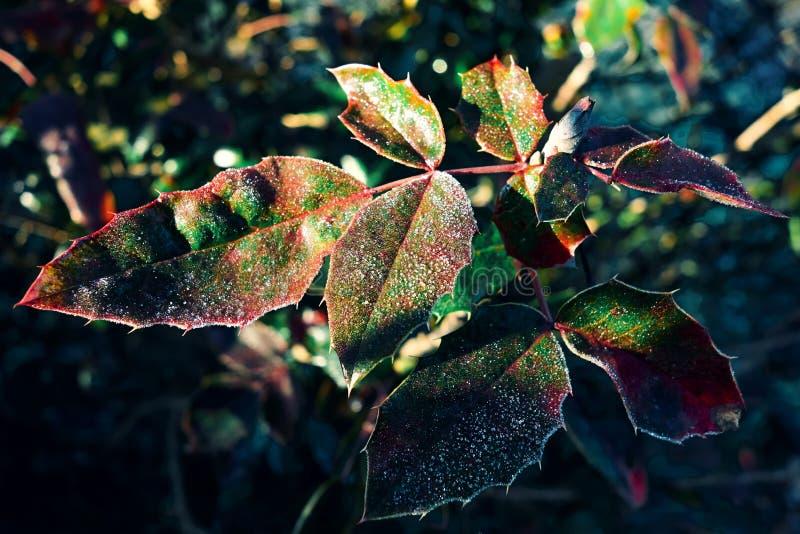 Blätter mit Frost lizenzfreie stockfotografie