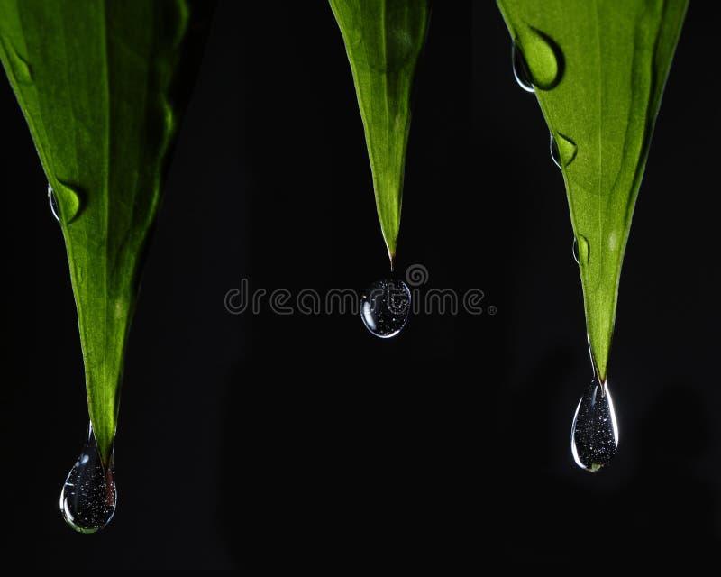 Blätter mit Tropfen stockfotografie