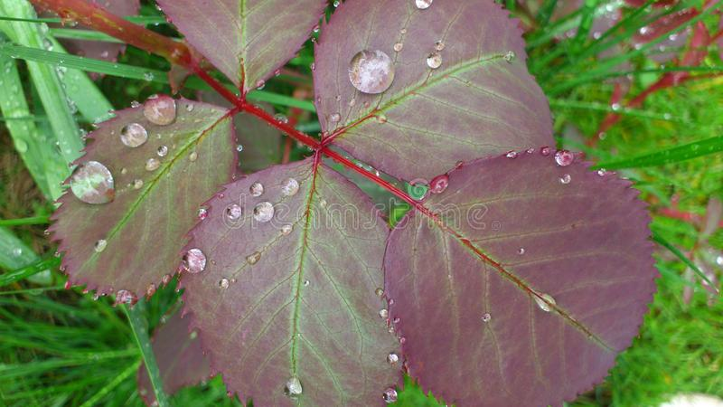 Blätter nach Regen lizenzfreies stockbild