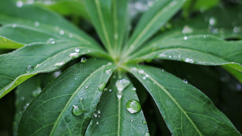 Blätter nach Regen stockbilder