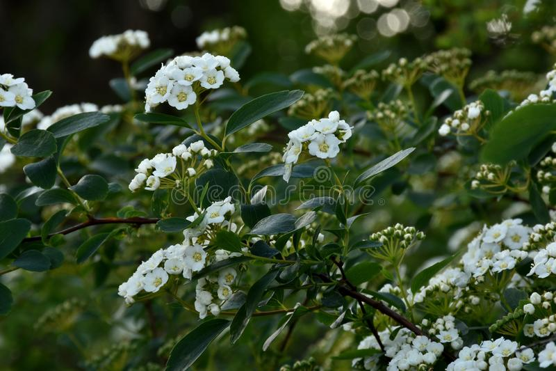 Blätter und Blüten stockfoto