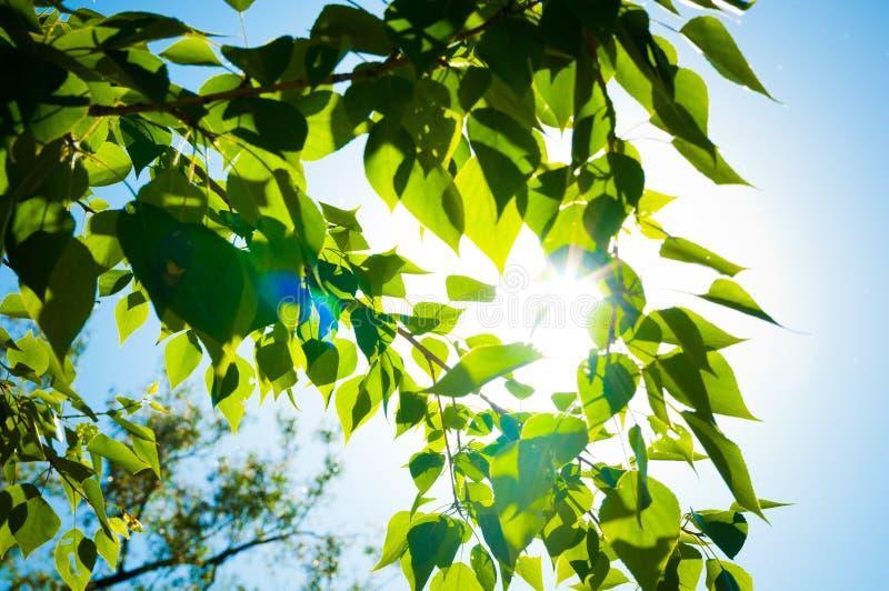 Blätter und blauer Himmel mit Sonne lizenzfreie stockbilder