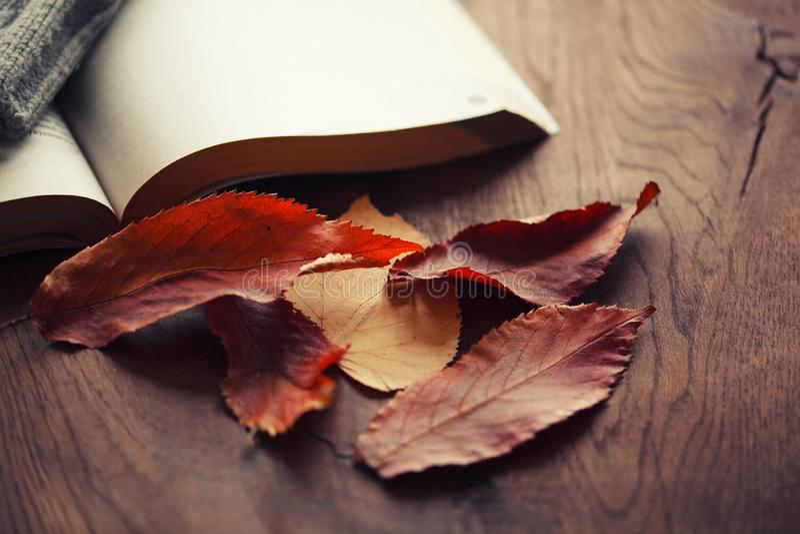 Blätter und ein Buch auf einem Holztisch lizenzfreies stockfoto