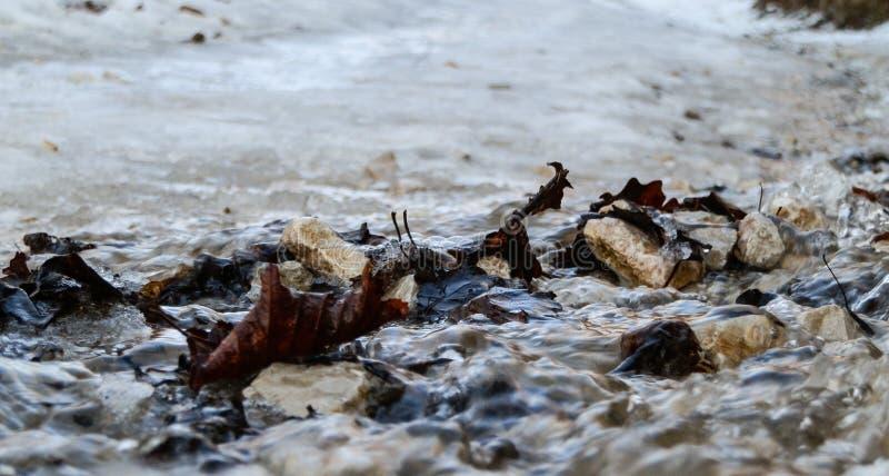 Blätter und Felsen trugen entlang durch Wasser von geschmolzenem Schnee stockbild