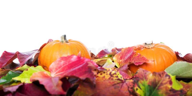 Blätter und Kürbise stockfotos