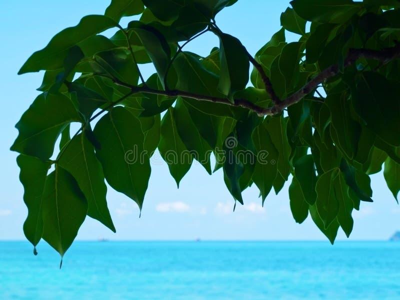 Blätter und Meer stockbilder