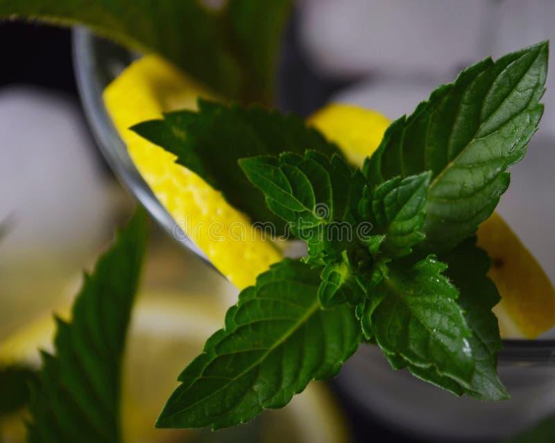 Blätter und Niederlassungen der frischen grünen wilden Minze lizenzfreies stockbild