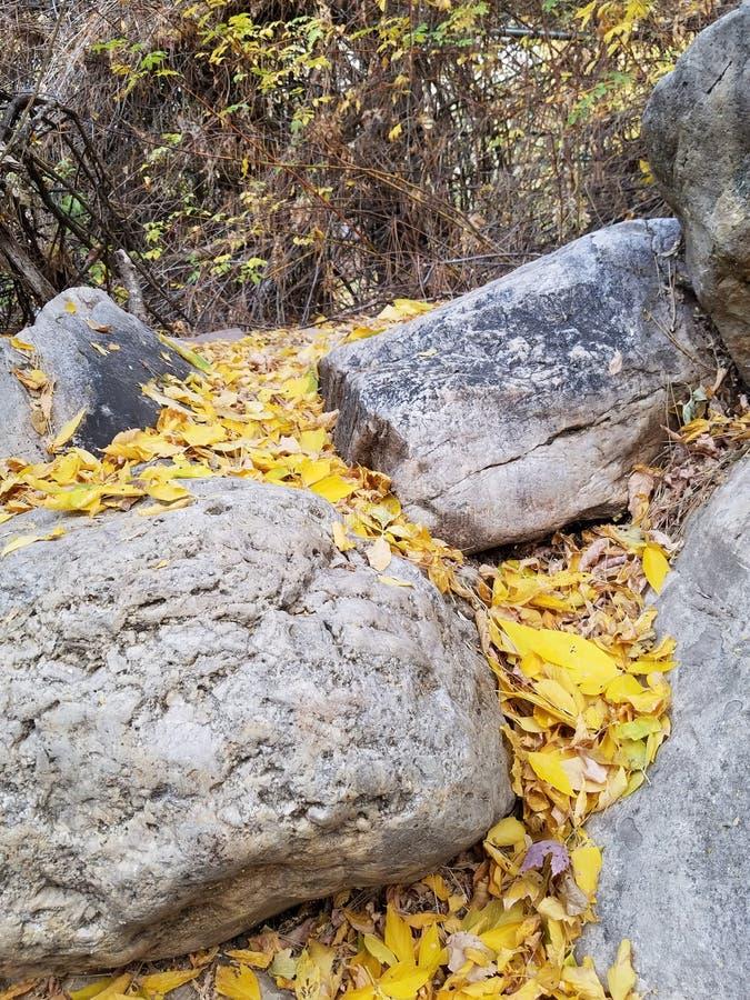 Blätter unter den Felsen stockbild
