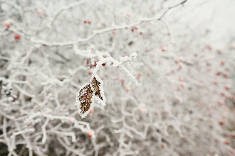 Blätter unter Eiskristallen lizenzfreie stockfotos