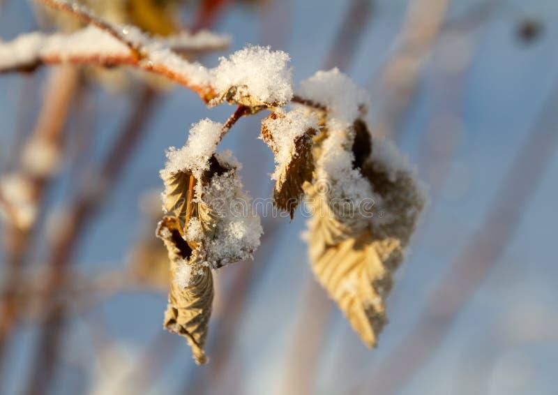 Blätter unter Schnee im Winter lizenzfreie stockbilder