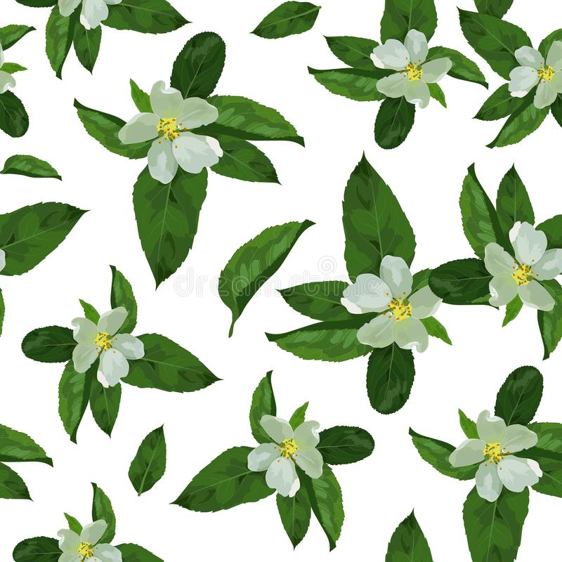 Blätter von apple2-01 lizenzfreie abbildung