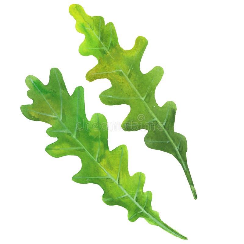 Blätter von Arugula lizenzfreies stockfoto
