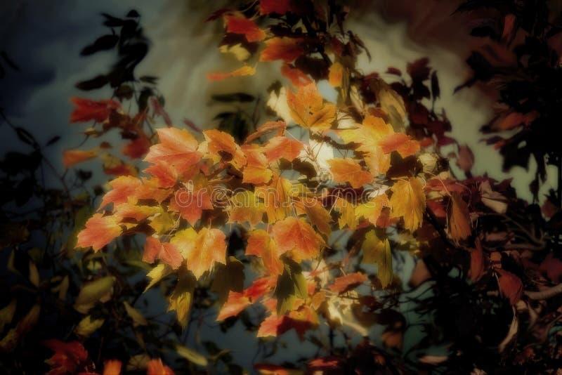 Blätter von Oktober stockbilder