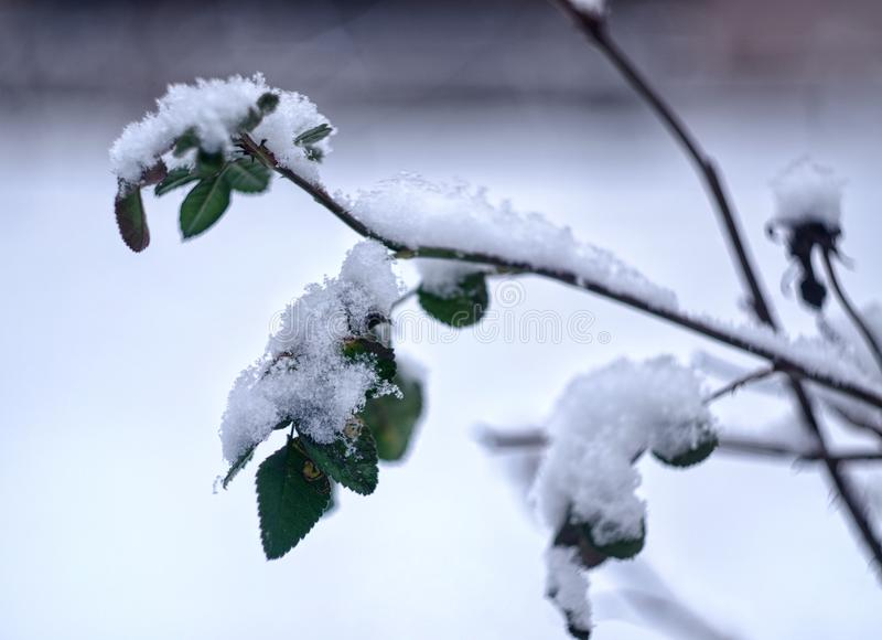 Blätter von stiegen unter den Schnee stockbilder