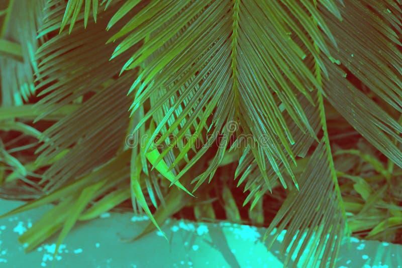 Blätterpalme stockfotos