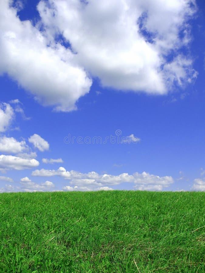 blå ängsky för bakgrund royaltyfria foton