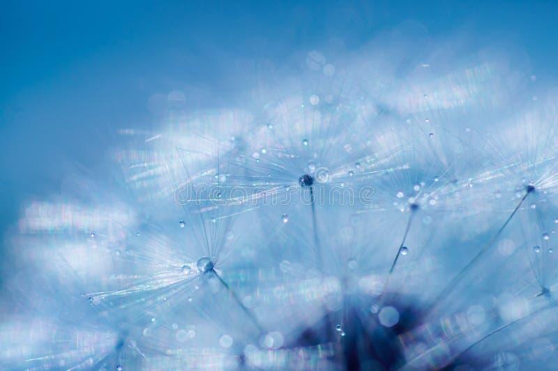 Blå abstrakt maskrosblommabakgrund, extrem closeup royaltyfri fotografi