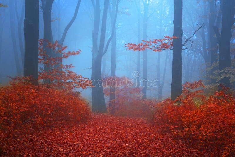 Blå atmosfär i en dimmig skog med röda sidor royaltyfri foto