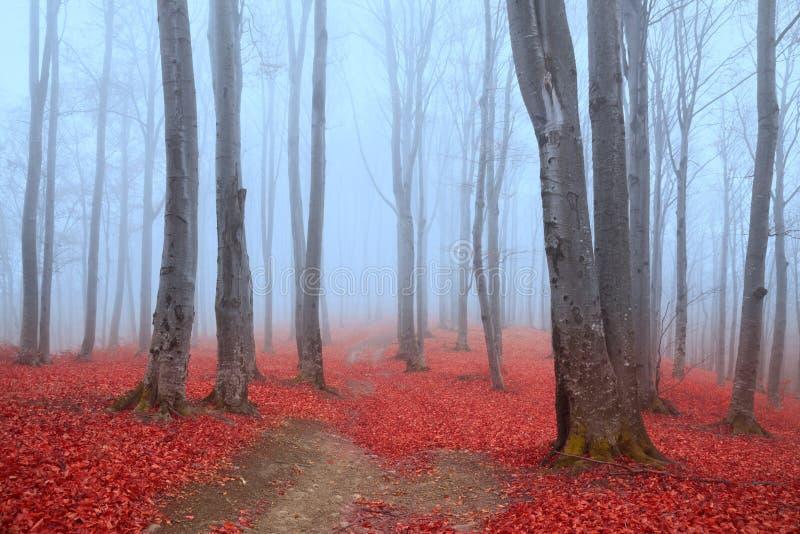Blå atmosfär i en dimmig skog med röda sidor royaltyfri fotografi