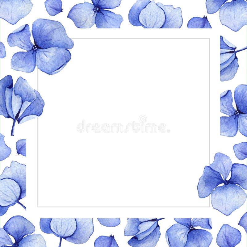 Blå bakgrund för vattenfärgvanlig hortensiablomma royaltyfri illustrationer