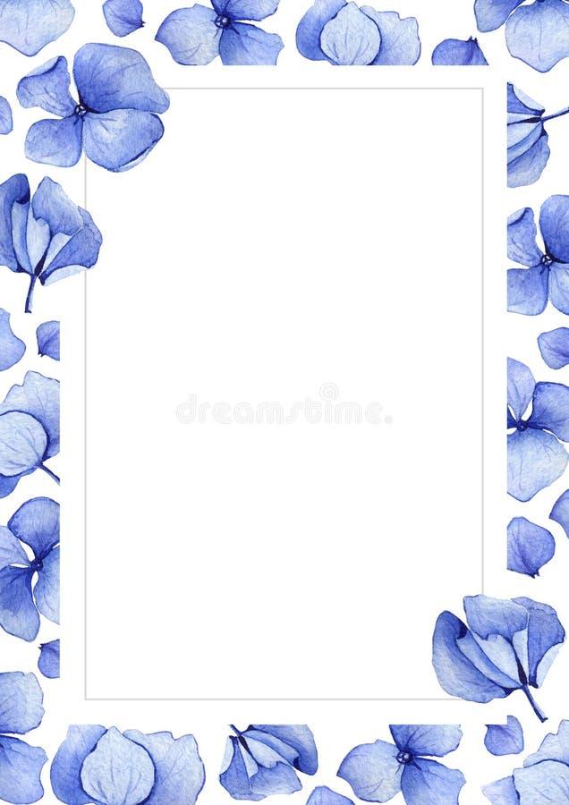 Blå bakgrund för vattenfärgvanlig hortensiablomma stock illustrationer