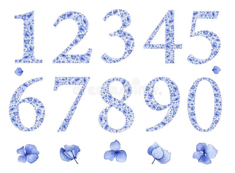 Blå blom- uppsättning för vattenfärgvanlig hortensianummer stock illustrationer