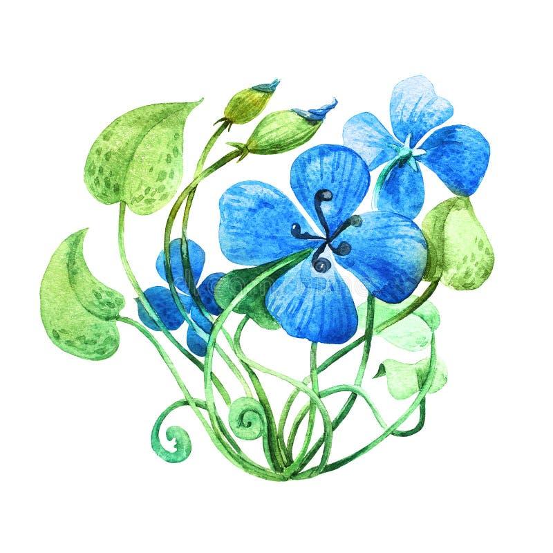 blå blomma Blom- illustration för vattenfärg Blom- dekorativ beståndsdel den blom- bakgrundsdesignen använder idealt den din vekt royaltyfri illustrationer