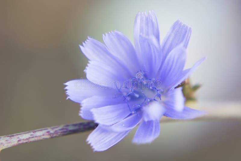 Blå blomma med trevlig bokeh fotografering för bildbyråer