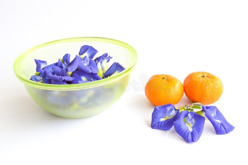 Blå blomma och apelsin för fjärilsärta fotografering för bildbyråer