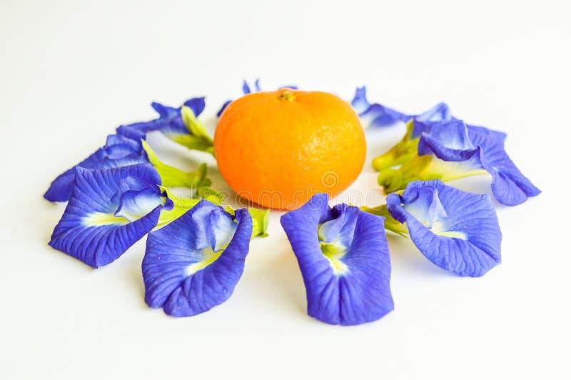 Blå blomma och apelsin för fjärilsärta royaltyfria bilder