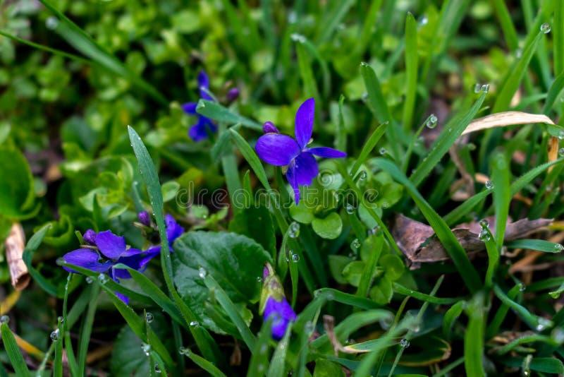 blå blommafjäder royaltyfri foto