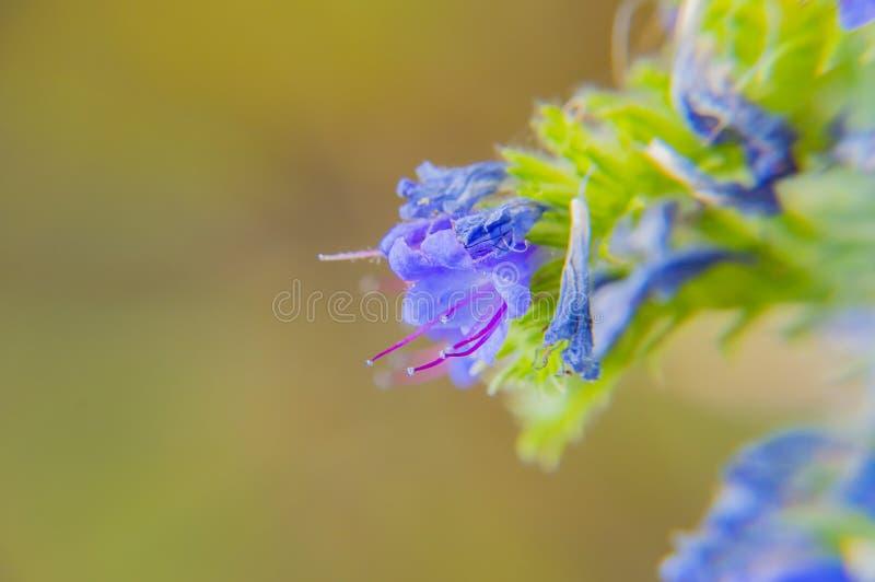 Blå blommaklocka på ängen royaltyfri fotografi