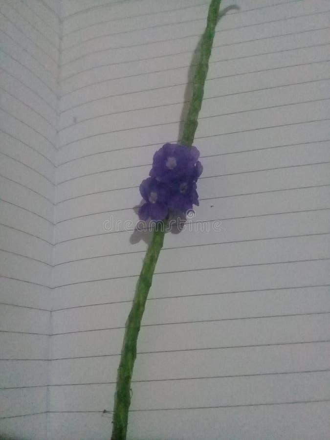 Blå blommaluppiness för skönhet royaltyfri fotografi