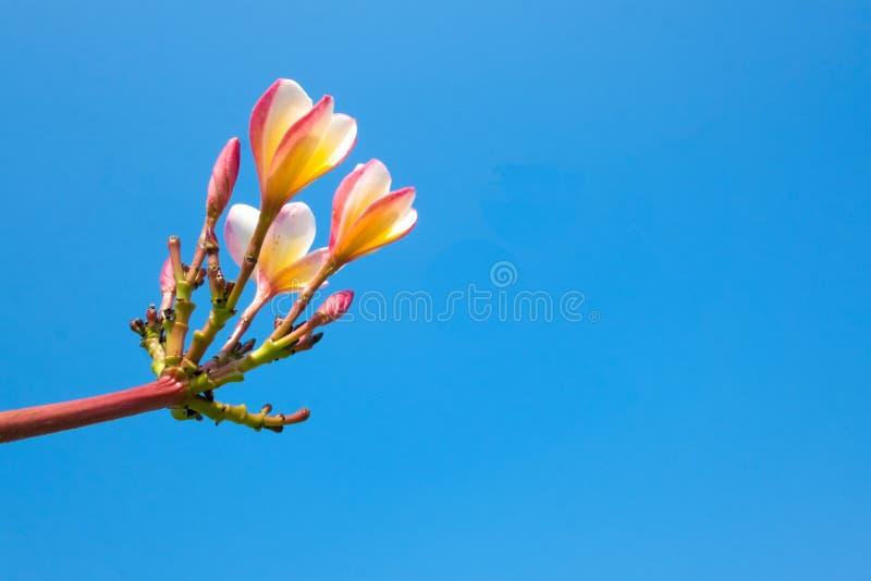 blå blommasky arkivbild